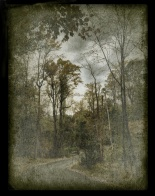 Autumn Path - Art by Heidi Sussman
