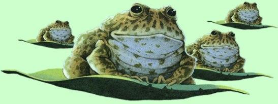 frog.scene
